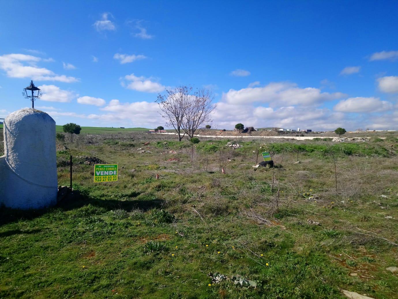FINCA DE 10 HECTÁREAS EN TERRADILLOS (REF: Alb-3) - foto 3 86742867-74b0-4ab5-b68c-834c25d62076.jpg