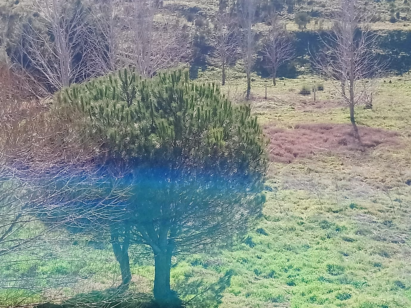 FINCA DE 10 HECTÁREAS EN TERRADILLOS (REF: Alb-3) - foto 2 baa1bbbb-3185-4920-947a-8b32ab7748fd.jpg